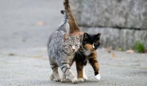 feral-cats-blog